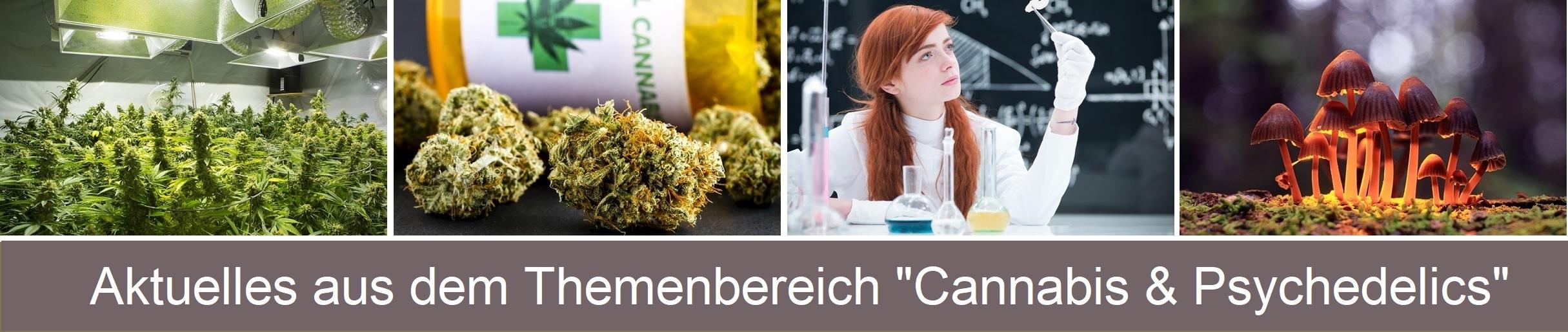 Cannabis Forschung