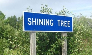 thumb_500x300_ShiningTree