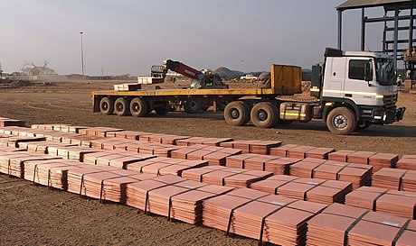tiger_resources_p6164435_1s